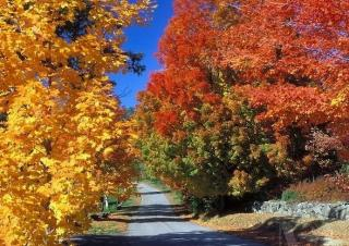 East Andover Fall